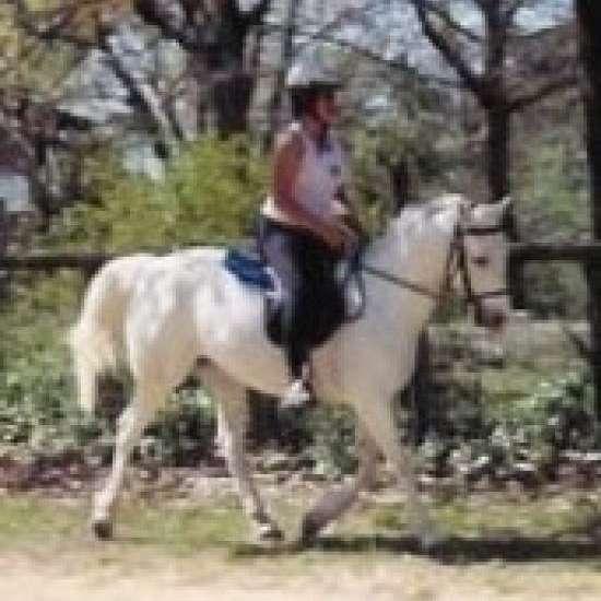 Sunnyland Arabians