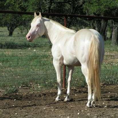 DSR Quarterhorses