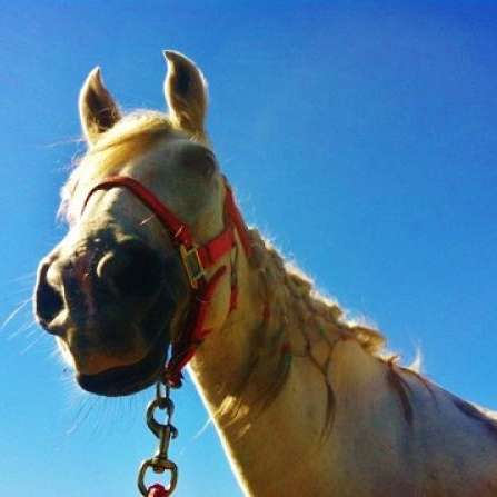 Make It or Break It Horse Training Services