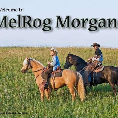 Melrog Morgan Farm