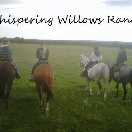 Whispering Willows Performance Horses and Cattle