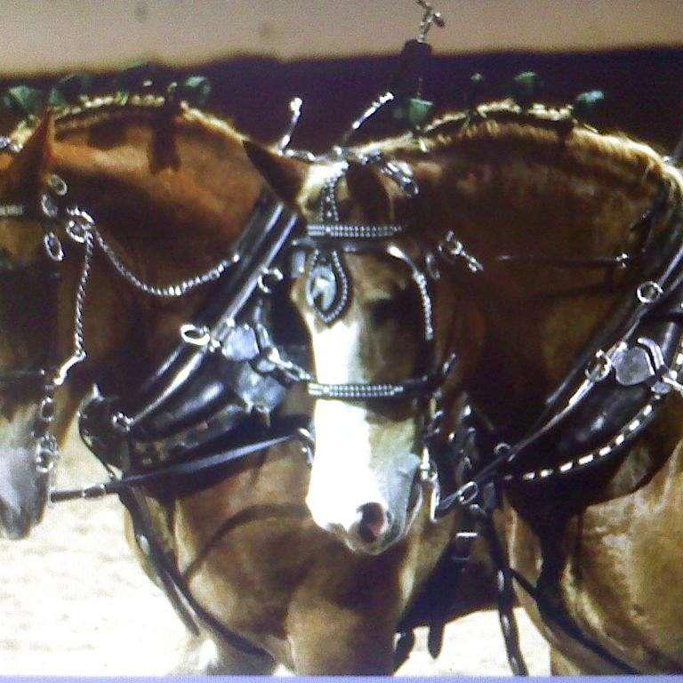 Hammer Horses