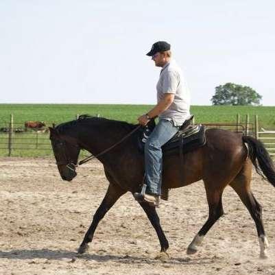 Zick Horse Training
