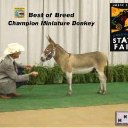 Castlewood Farm Miniature Donkeys
