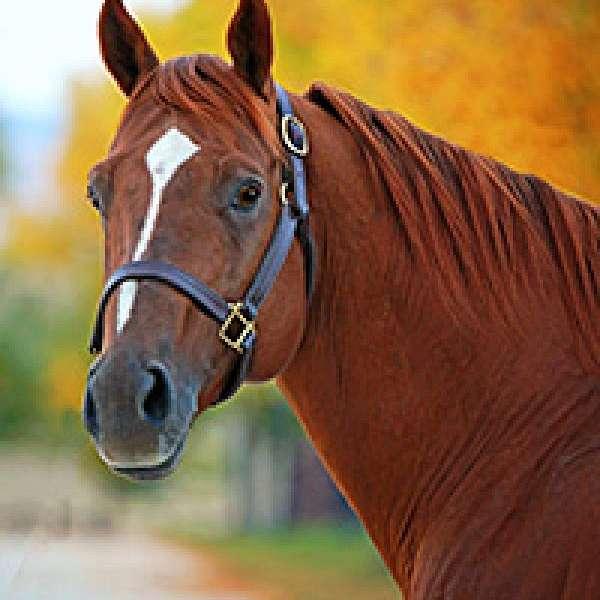 Y.O. Equine Ranch LLC Performance Horses