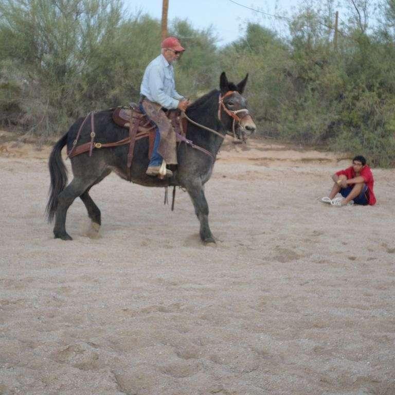 Jimmies Horses
