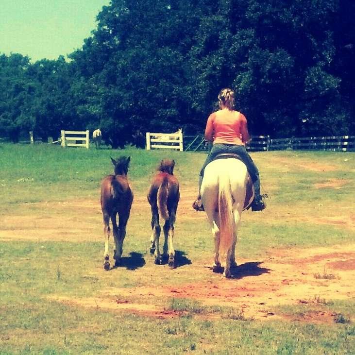 Unbridled Spirit Natural Horsemanship
