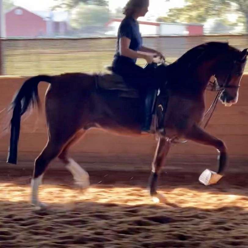 Silvercrest Sport Horses