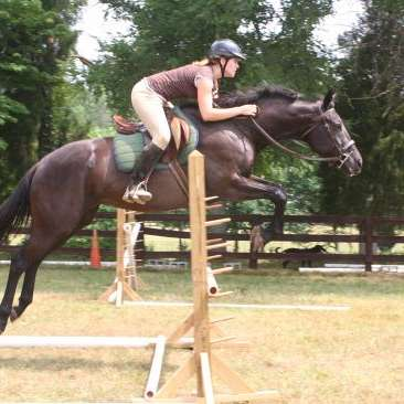 Equine Kingdom