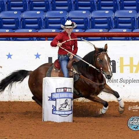 CB Reining Horses