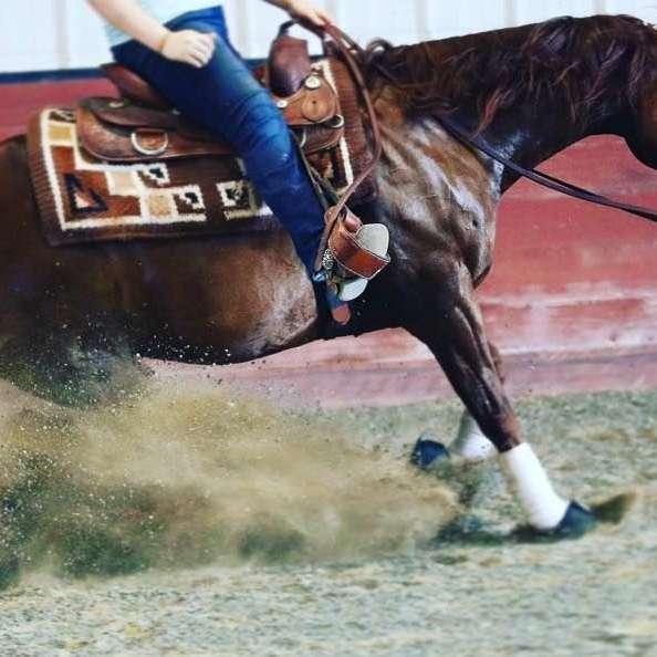 Double T Horse Ranch LLC
