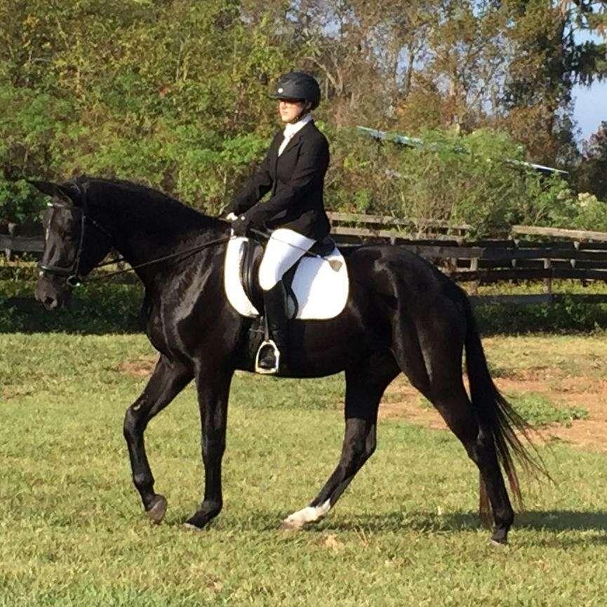 Eclipse Sporthorses LLC