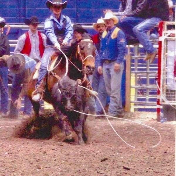 Doin' It Right Performance Horses