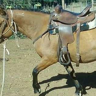 Worthy Trails Horsemanship