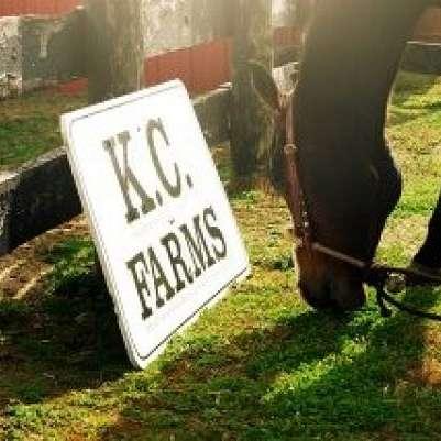 KC Performance Horses