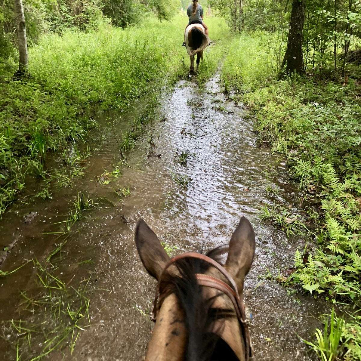 Roberts' Farm  Horse Boarding and Western Riding L