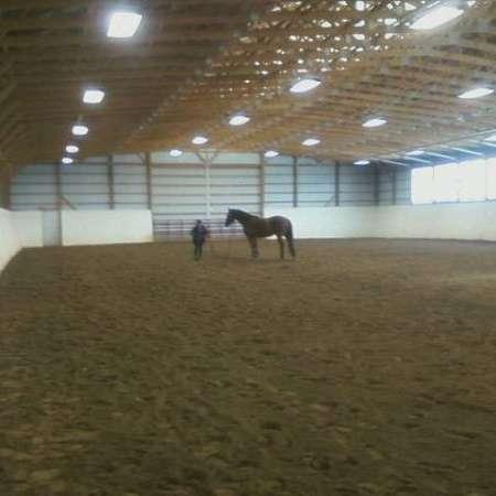Moon Riverdance Equestrian