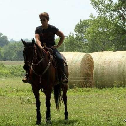 Wingate Horse Shoeing