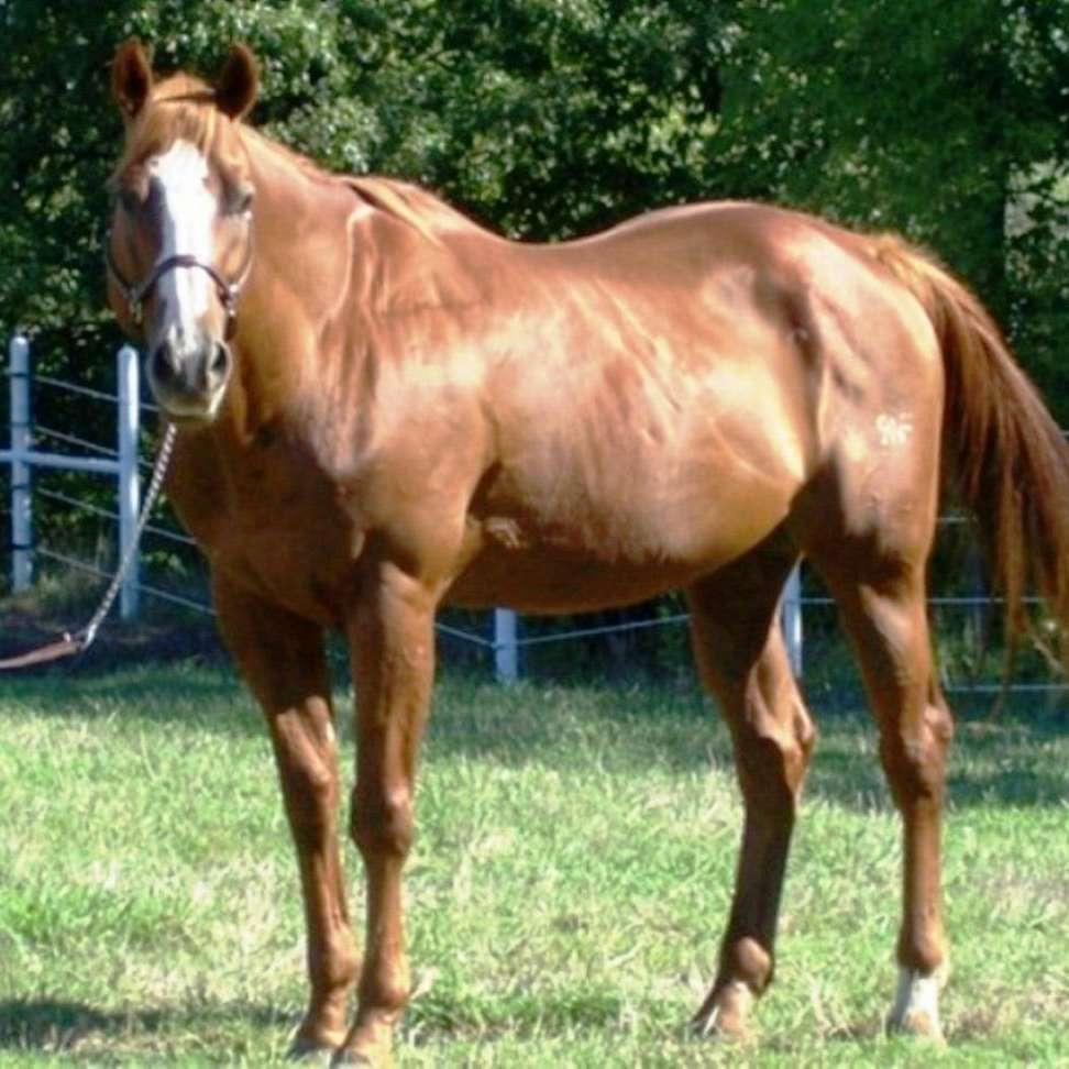 Grant Quarter Horses