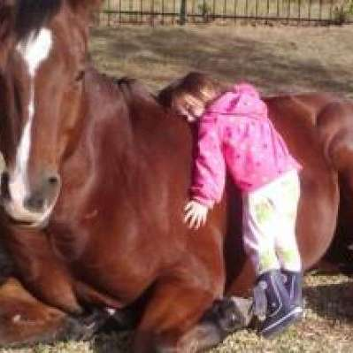 Gittins Horses