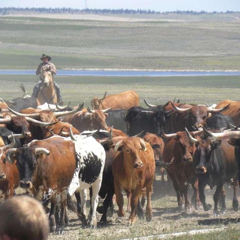 Cremer Livestock