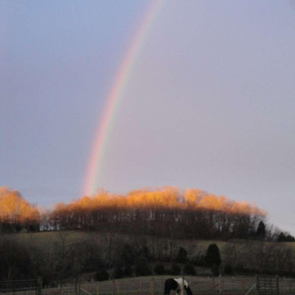 Golden Gaits Farm