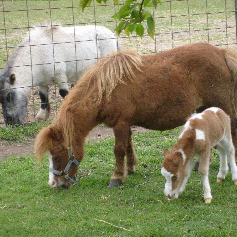 Sparks Family Farm
