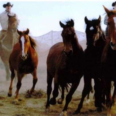 JH Performance Horses LLC.