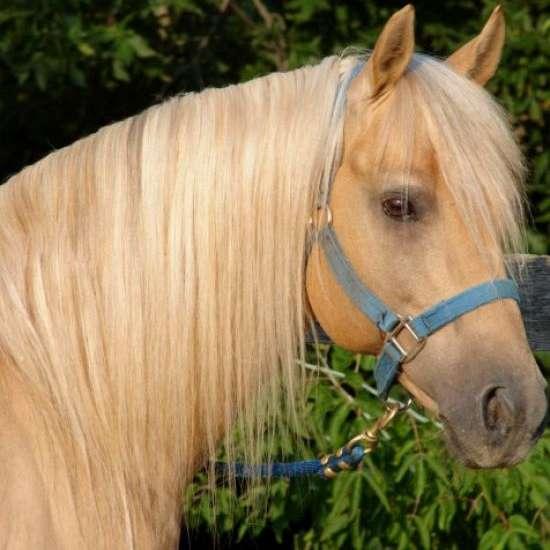 O'Neill Horse Farms