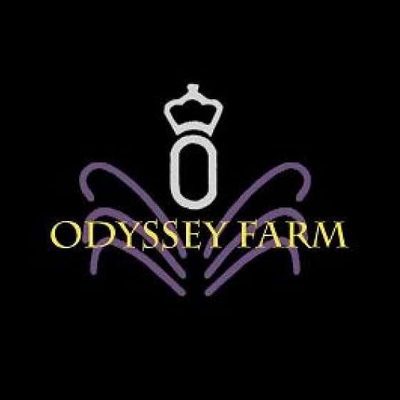 Odyssey Farm Sales