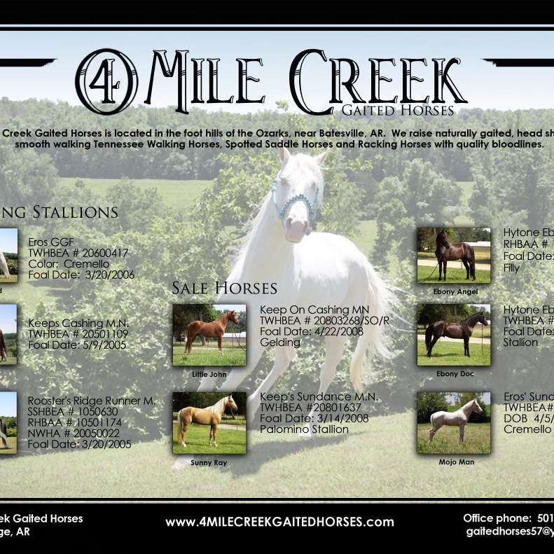 4 Mile Creek Horses