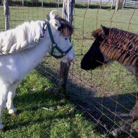 Valley Brook Ministure Horses