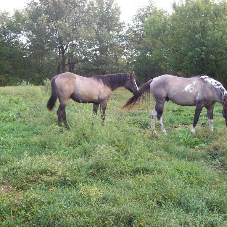 DIAMOND T HORSES