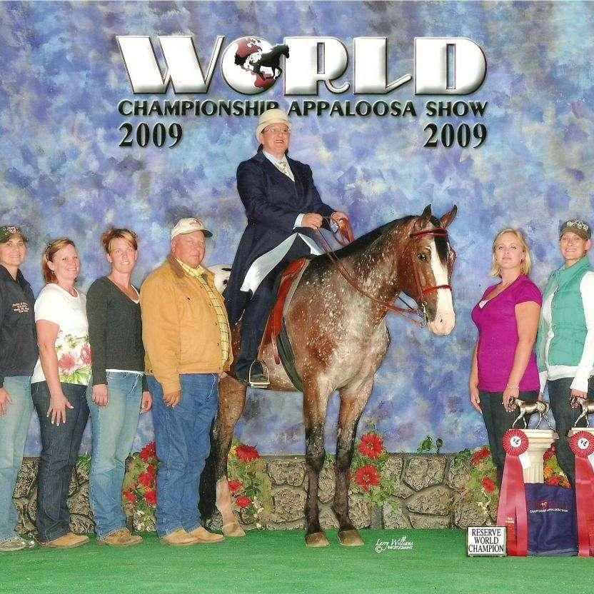 Caitlin Raysser Show Horses