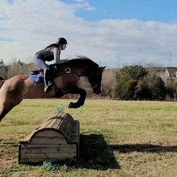 Barrel Horses and More