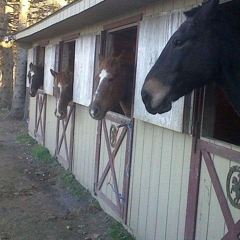 fox pine stables