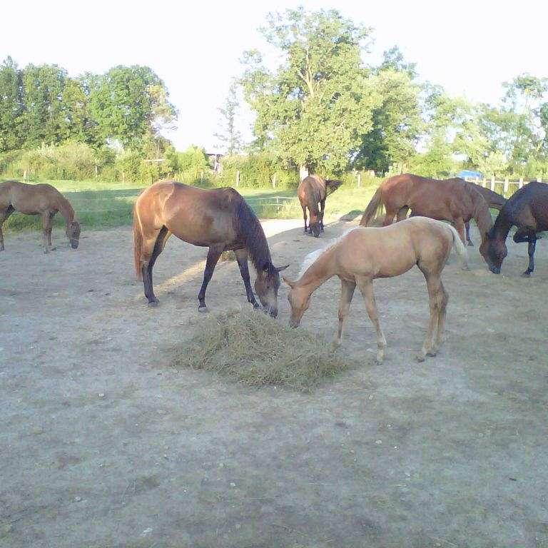 NKKB Performance Horses
