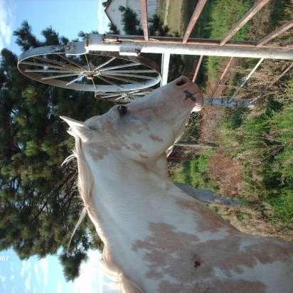 Kissel Paint Horses