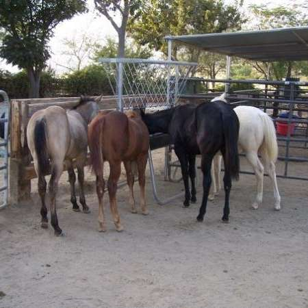 Performance Horse Ranch