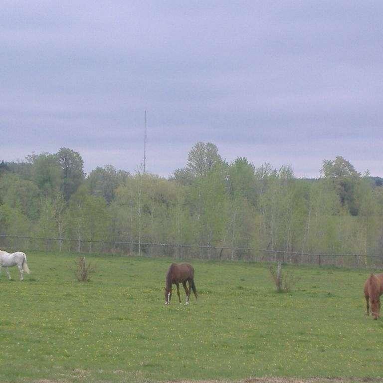 Vivian Ridge Farm