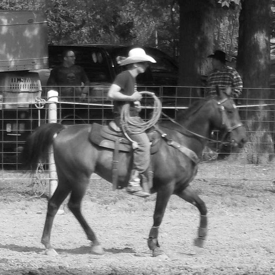 MP Horse Company