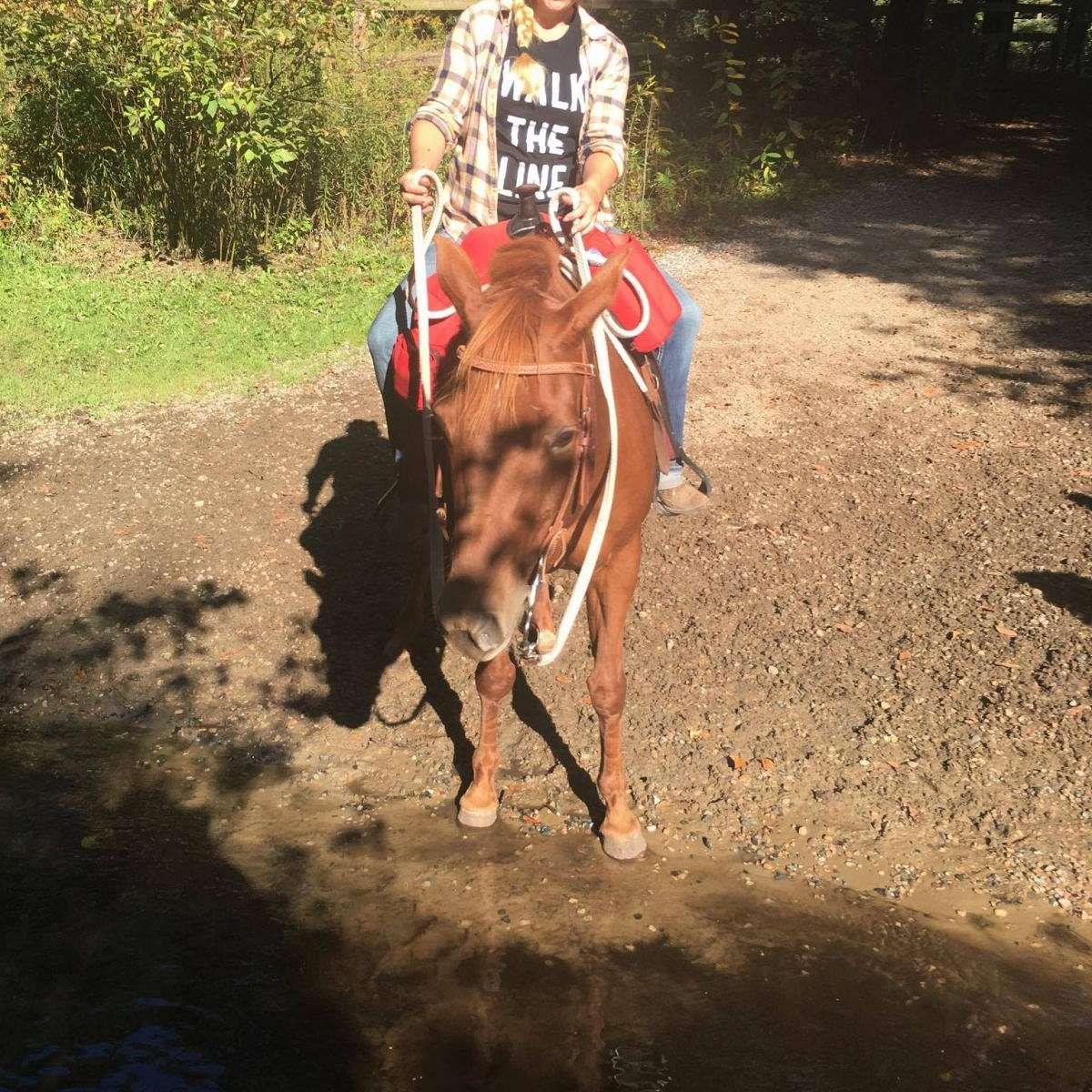 Jazzdiddit horse training