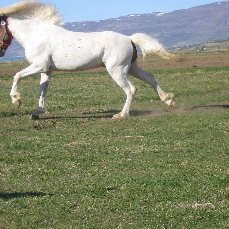 Whitehorse.ehf