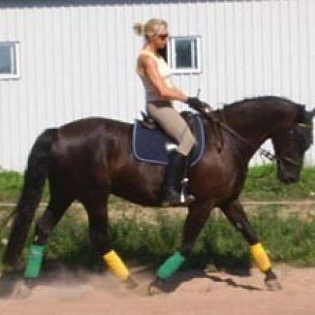 Clear-enk Stables