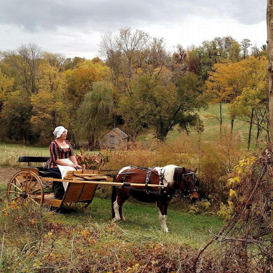 Tall Ts Pony Farm