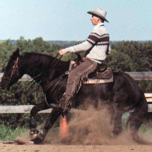 Sunwest Equine Services