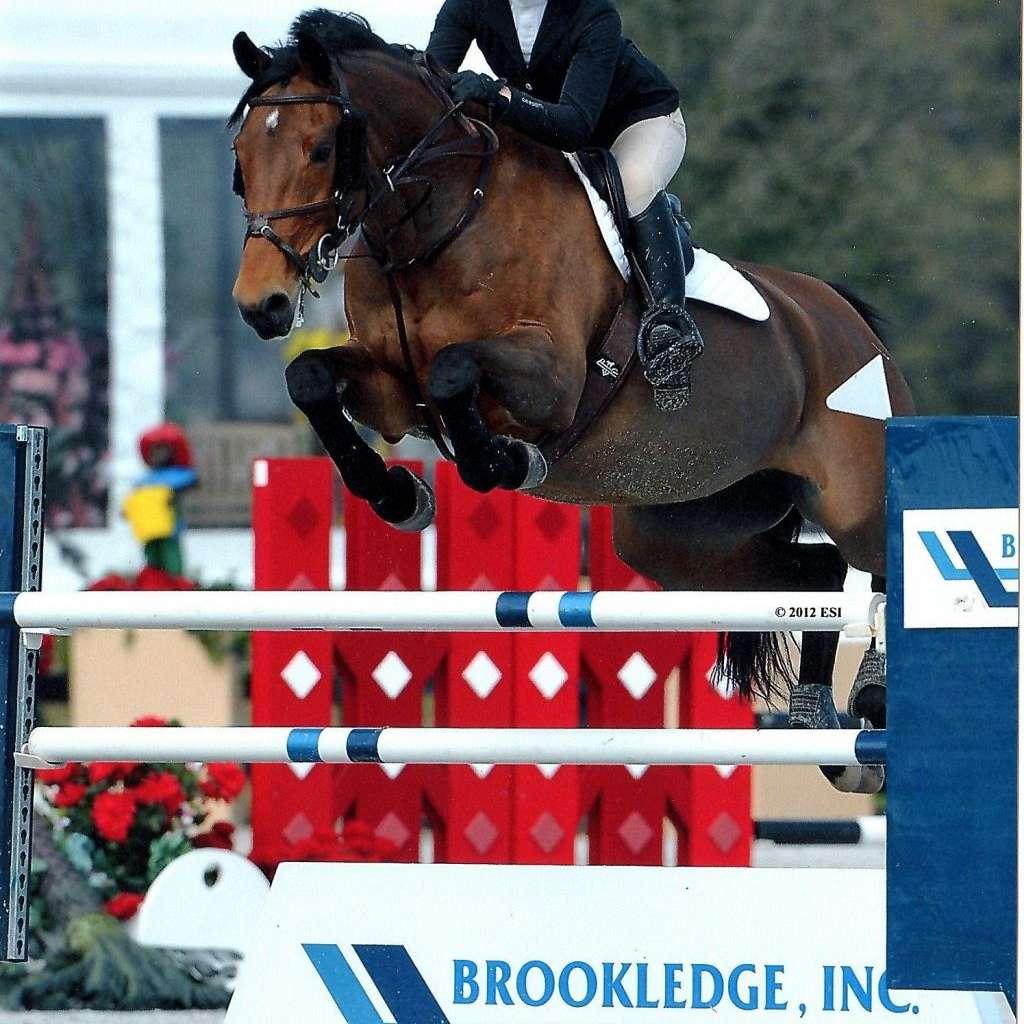 Olive Hill Sporthorses