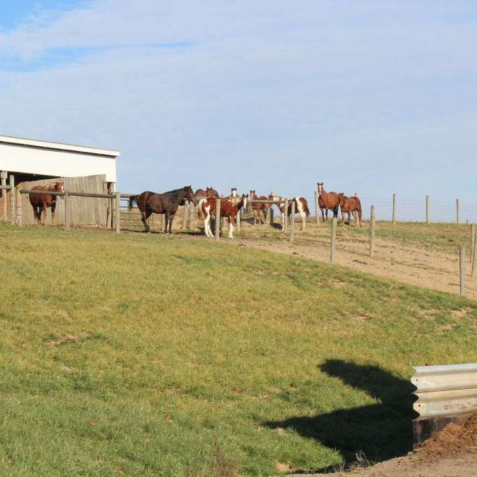 Luburgh Farms