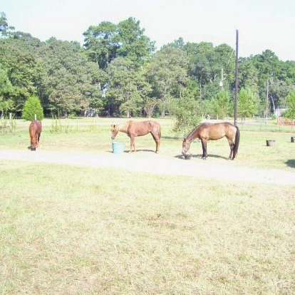 Twisted Wire Training  Performance Horses