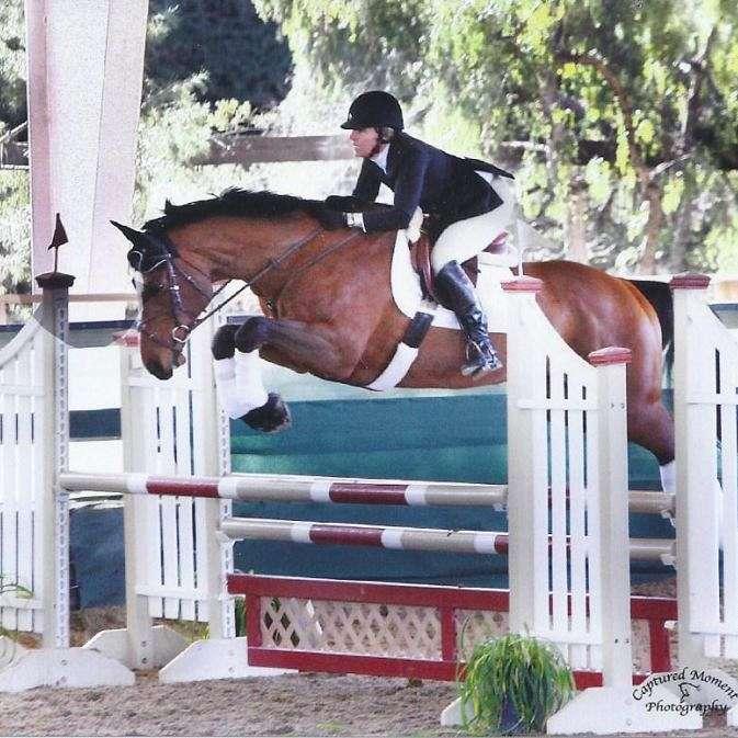 CHARLEBOIS SPORT HORSES